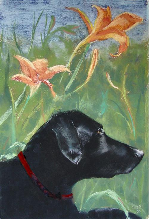 watercolor of a black labrador