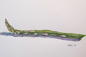 watercolor of an asparagus