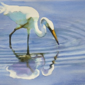 egret with reflection in the water