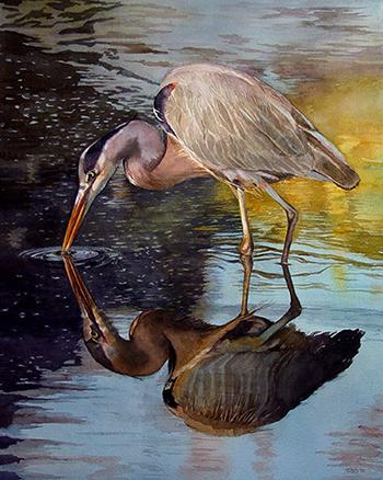 wading Heron