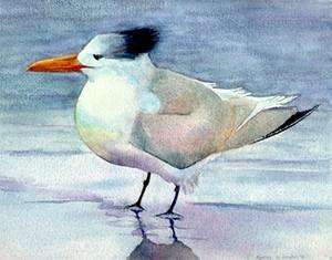 watercolor of Royal Tern